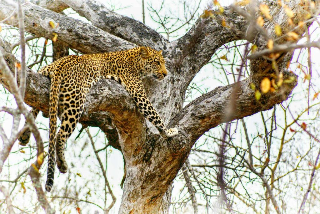 Leopard Big 5 | Toro River Lodges