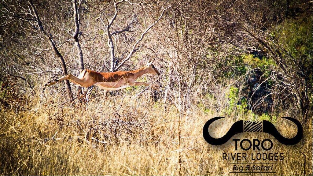 Toro River Lodges | Big 5 Safari